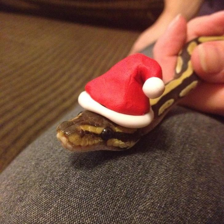 animals in hats - Snake