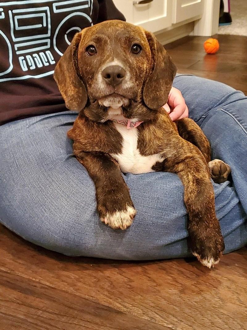 adopted pet - Dog - 1