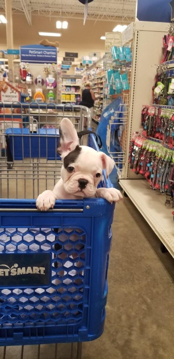 adopted pet - Dog - PerSmart Charties TSMART