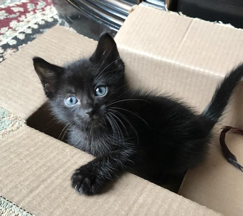 adopted pet - Cat