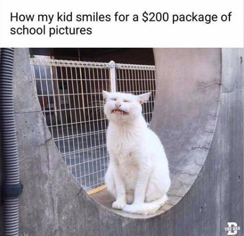cat smiling awkwardly