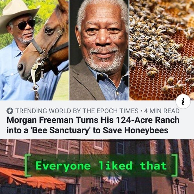 People - i TRENDING WORLD BY THE EPOCH TIMES 4 MIN READ Morgan Freeman Turns His 124-Acre Ranch into a 'Bee Sanctuary to Save Honeybees Everyone 1iked that