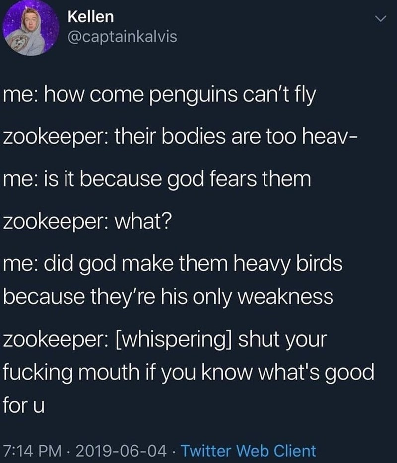 funny tweet - Text - Kellen @captainkalvis me: how come penguins can't fly zookeeper: their bodies are too heav- me: is it because god fears them zookeeper: what? me: did god make them heavy birds because they're his only weakness zookeeper: [whispering] shut your fucking mouth if you know what's good for u 7:14 PM 2019-06-04 Twitter Web Client