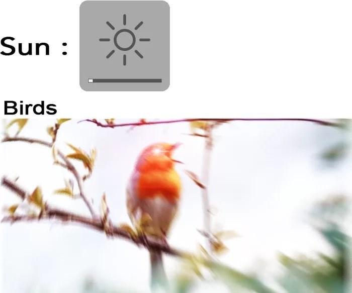 meme - Organism - Sun Birds