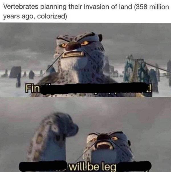 meme - Footwear - Vertebrates planning their invasion of land (358 million years ago, colorized) Fin will be leg