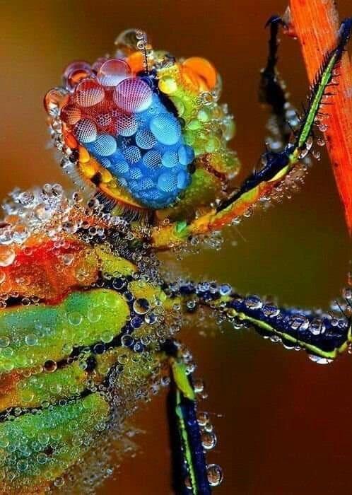 bugs - Macro photography
