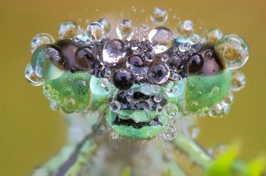 bugs - Water
