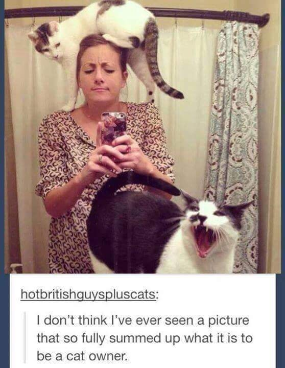 cat meme - Photo caption - hotbritishguyspluscats: I don't think I've ever seen a picture that so fully summed up what it is be a cat owner. orane