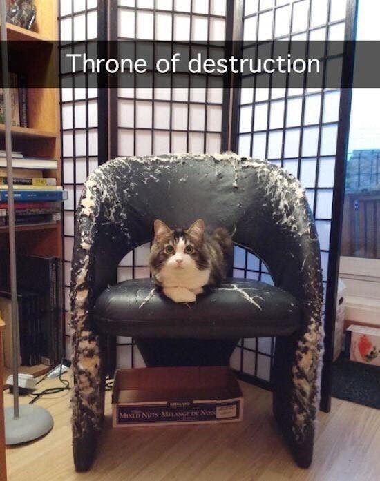 cat meme - Furniture - Throne of destruction MIXED NUTs AMLANGE E No