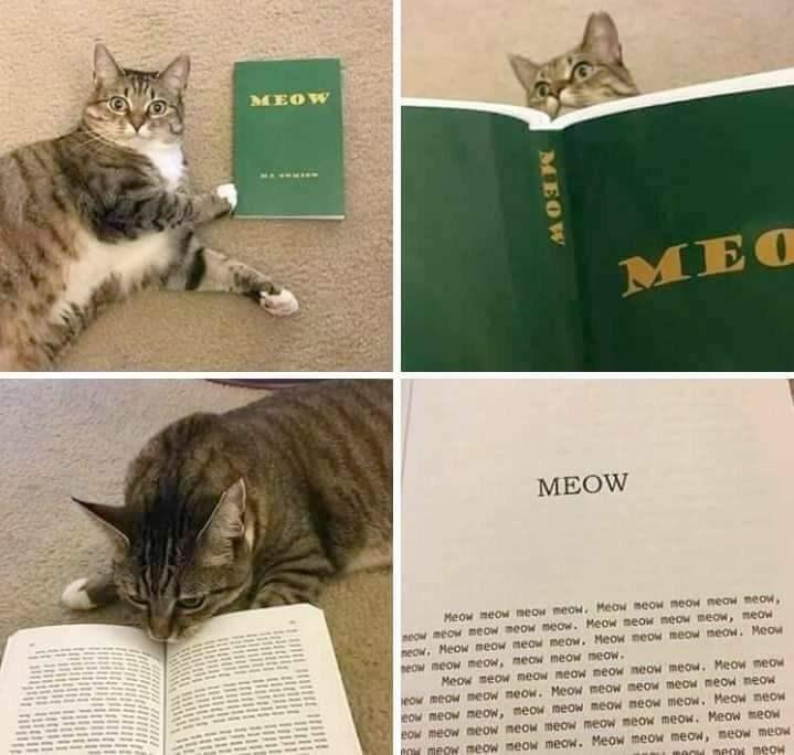 cat meme - Cat - MEOW MEO МEOW Meow meow eow meow. Meow meow meow neow meow, neow meow meow meow meow. Meow meow neow meow, neow neow. MeoW meow meOW meow. Meow meow meow meow. Meow eow meow meow, meow meow meow. Meow meow meow meow meow meow meow. Meow meow eow meow meow meow. Meow meow meow meow meow neow eOw meow meow, meow meow meow meow meow. Meow neow eow meow meow meow meow meow meow meow. Meow meow CON meow meow meow meow. Meow meow.meow, meow meow BOON meow meow MEOW