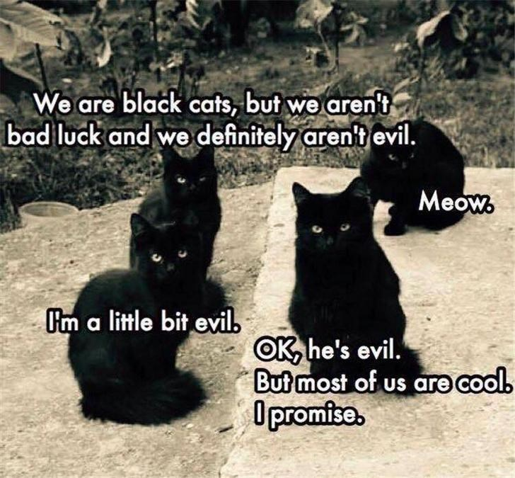cat meme - Cat - We are black cats, but we aren't bad luck and we definitely arent evil. Meow Um a little bit evil OK he's evil. But most of us are cool. Opromfse.