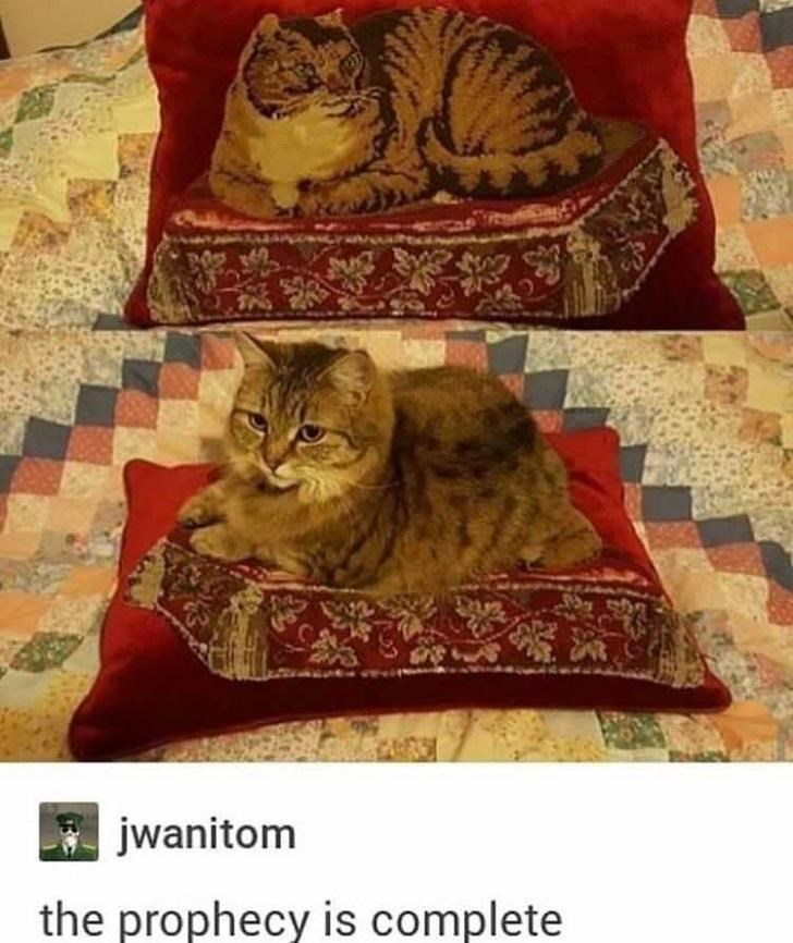 cat meme - Cat - m jwanitom the prophecy is complete