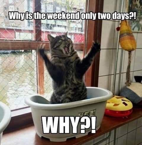 cat meme - Cat - Whyisthe weekendonly twodays?! WHY?!