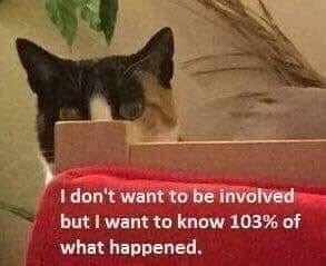 cat meme - Cat - I don't want to be involved but I want to know 103% of what happened.