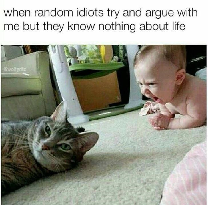 cat meme - Cat - when random idiots try and argue with me but they know nothing about life @wolfgrilz