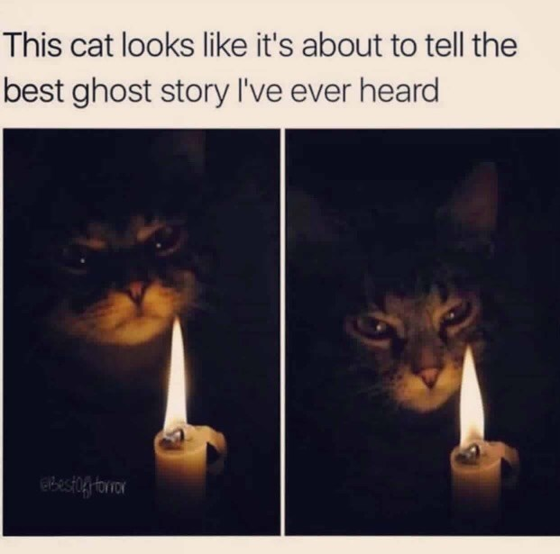 cat meme - Cat - This cat looks like it's about to tell the best ghost story I've ever heard Bestog torior
