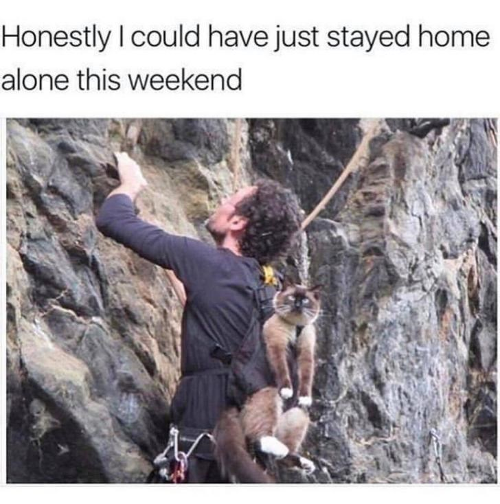 cat meme - Adventure - Honestly I could have just stayed home alone this weekend