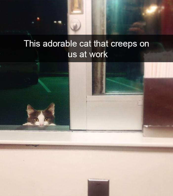 cat meme - Cat - This adorable cat that creeps on us at work