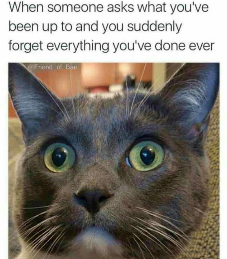 cat meme - Cat - When someone asks what you've been up to and you suddenly forget everything you've done ever Friend of Bae