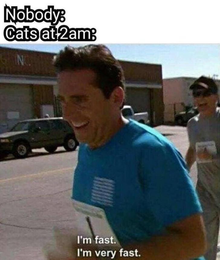 cat meme - T-shirt - Nobodys Cats at 2am NC I'm fast. I'm very fast.