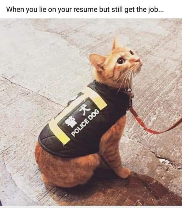 cat meme - Dog clothes - When you lie on your resume but still get the job... POLICE DOG