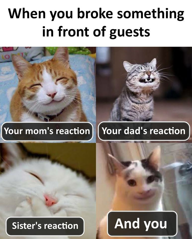 lolcats cute Memes Cats funny - 9330625792