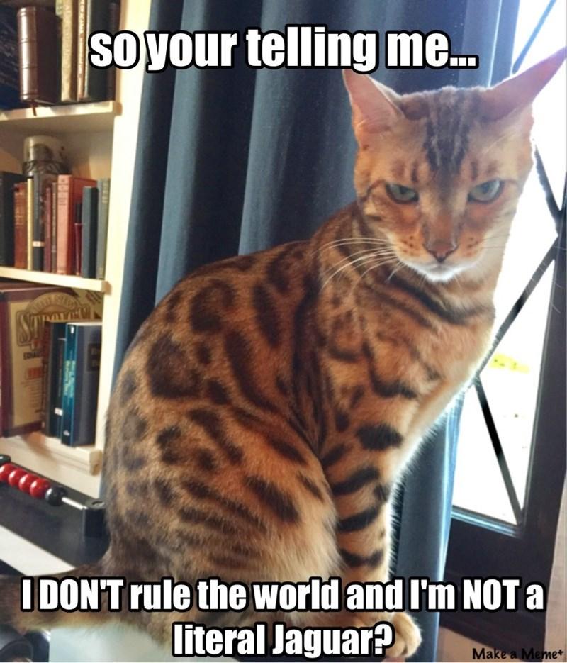 lolcats funny memes Memes cat memes - 9330626816