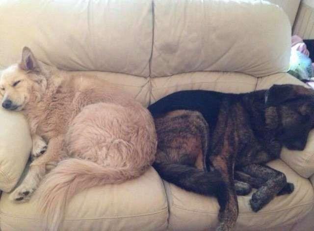 grieving dog - Mammal