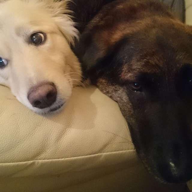 grieving dog - Dog