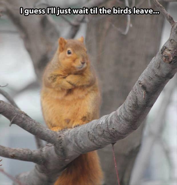 animal meme - Squirrel - Oguess Hljust wait til the birds leave...