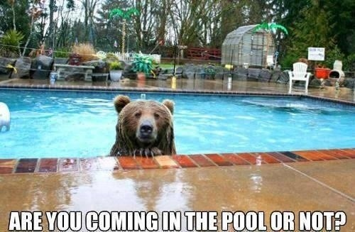 animal meme - Bear - ARE YOU COMINGIN THE POOL OR NOT?