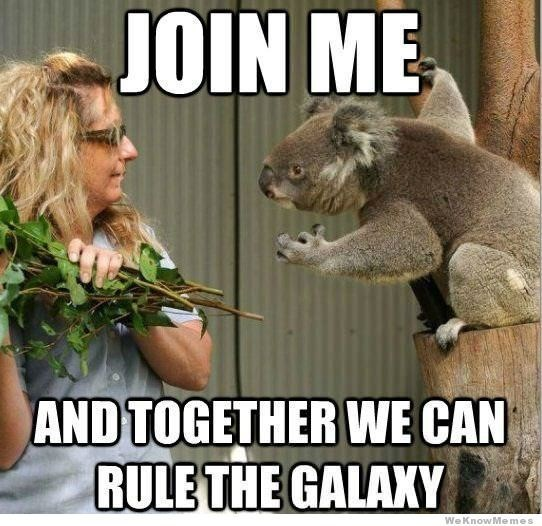 animal meme - Koala - JOIN ME AND TOGETHER WE CAN RULE THE GALAXY We KnowMemes