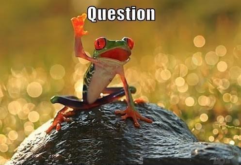 animal meme - Frog - Question