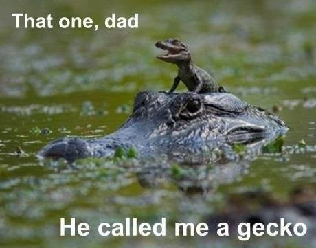 animal meme - Alligator - That one, dad He called me a gecko
