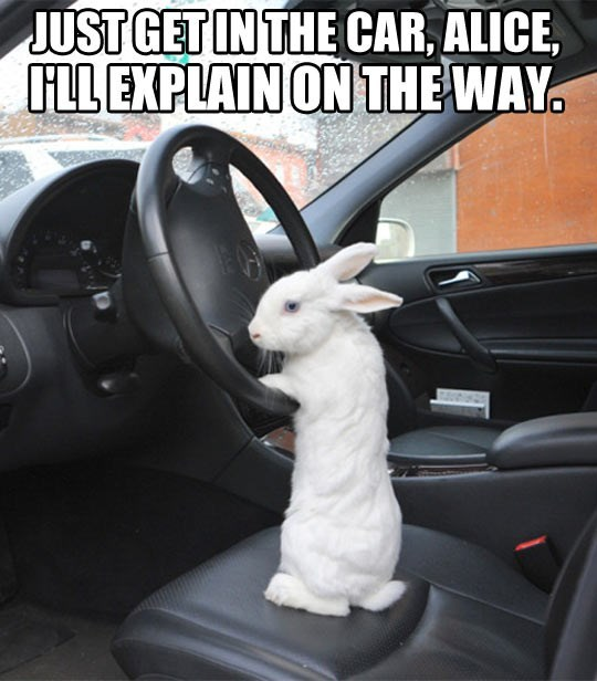 animal meme - Vehicle door - JUST GET IN THE CAR, ALICE ILL EXPLAIN ON THE WAY.