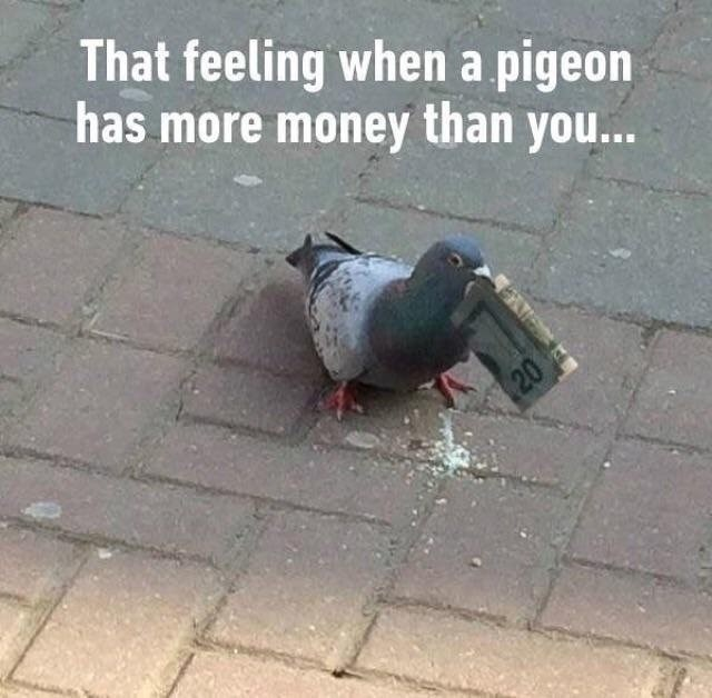 animal meme - Pigeons and doves - That feeling when a pigeon has more money than you... 20