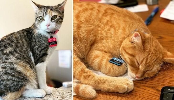 Cat - HELLO DEBIT CREDIT