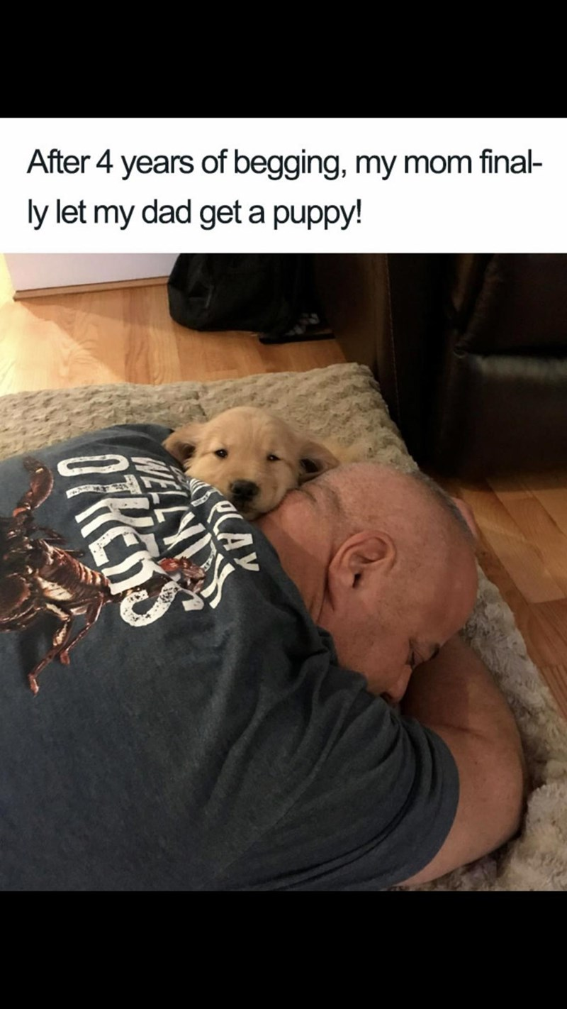 Meme - Companion dog - After 4 years of begging, my mom final- ly let my dad get a puppy! CAY