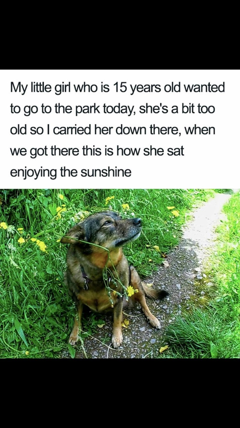 Meme - Dog breed - My little girl who is 15 years old wanted to go to the park today, she's a bit too old so I carried her down there, when we got there this is how she sat enjoying the sunshine