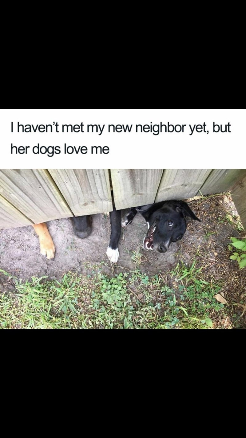 Meme - Grass - I haven't met my new neighbor yet, but her dogs love me