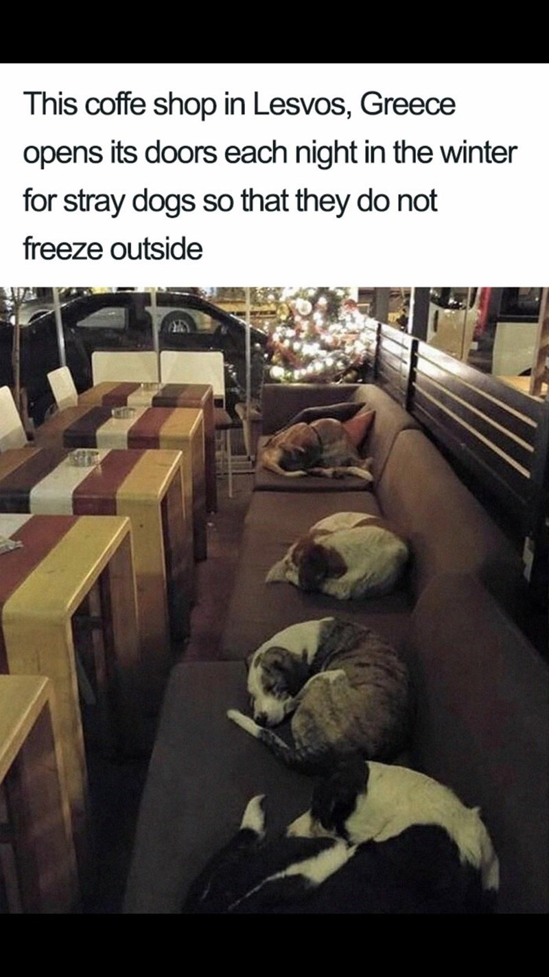 Meme - Adaptation - This coffe shop in Lesvos, Greece opens its doors each night in the winter for stray dogs so that they do not freeze outside