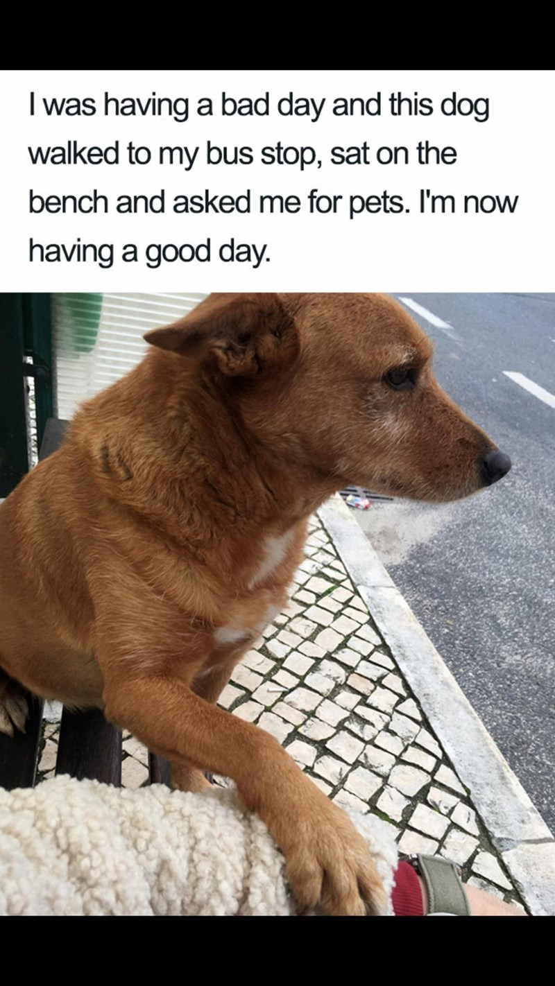 Meme - Dog - I was having a bad day and this dog walked to my bus stop, sat on the bench and asked me for pets. I'm now having a good day. AV AEAV