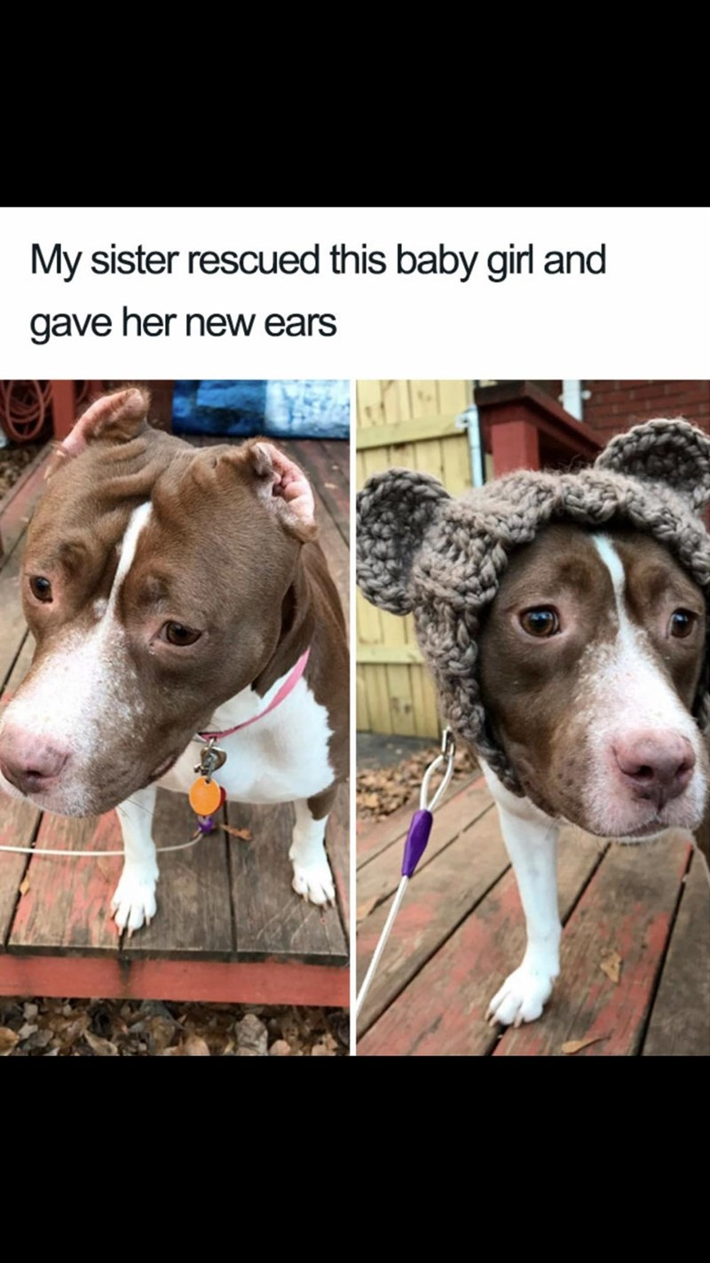 Meme - Dog - My sister rescued this baby girl and gave her new ears
