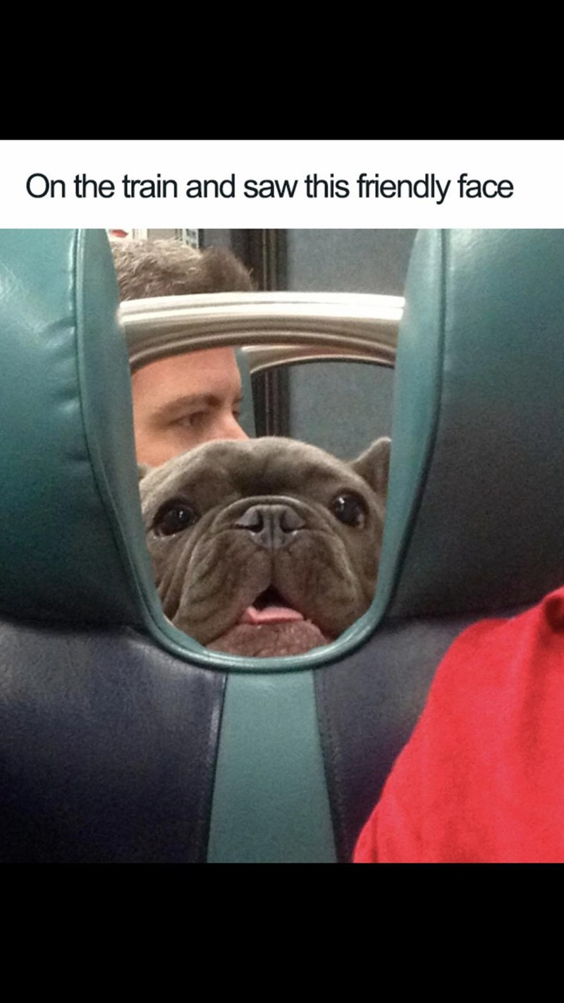 Meme - Dog - On the train and saw this friendly face