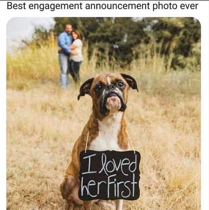Meme - Dog - Best engagement announcement photo ever hertirst