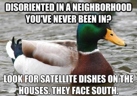 advice mallard - Bird - DISORIENTEDIN ANEIGHBORHOOD YOU'VENEVER BEEN IN? LOOK FOR SATELLITE DISHES ON THE HOUSES. THEY FACE SOUTH