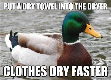 advice mallard - Bird - PUT A DRY TOWEL INTO THE DRYER CLOTHES DRY FASTER quickemo.com