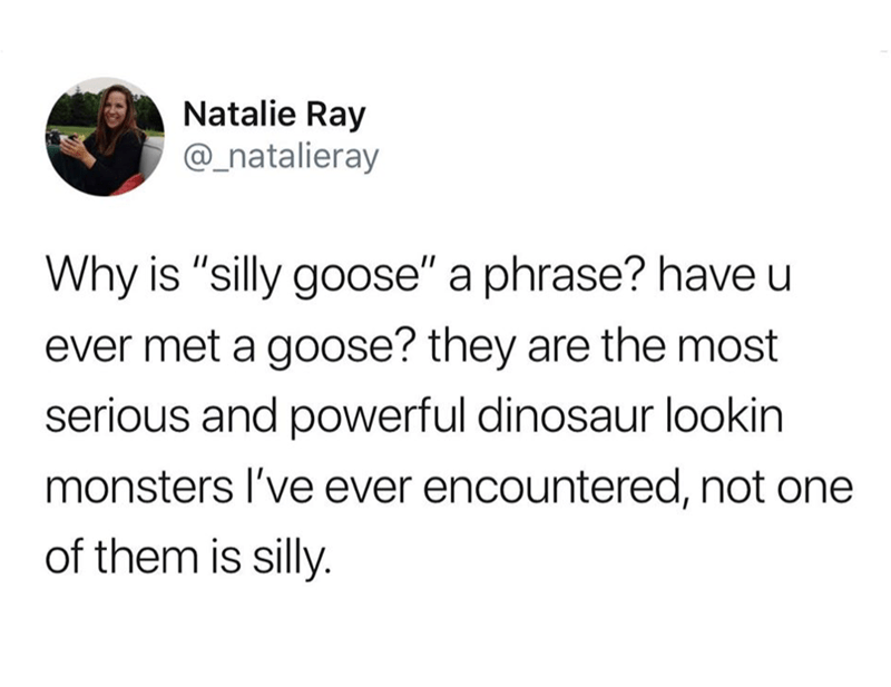 """meme - Text - Natalie Ray @_natalieray Why is """"silly goose"""" a phrase? have u ever met a goose? they are the most serious and powerful dinosaur lookin monsters I've ever encountered, not one of them is silly."""