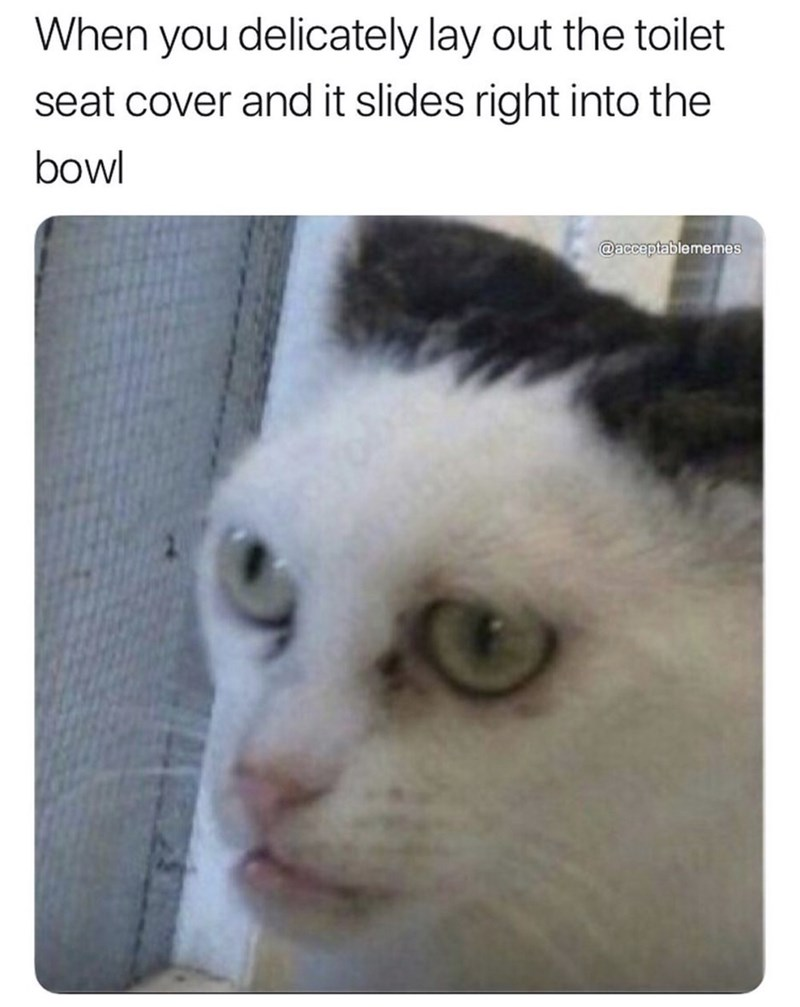 Meme - Cat - When you delicately lay out the toilet seat cover and it slides right into the bowl @acceptablememes