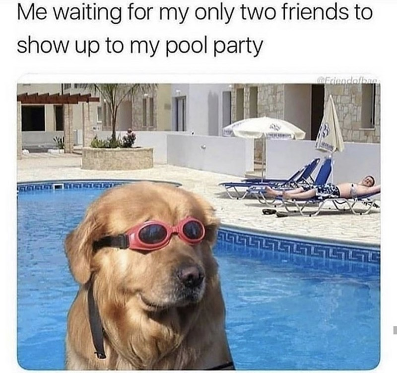 Meme - Dog - Me waiting for my only two friends to show up to my pool party Friendofbae